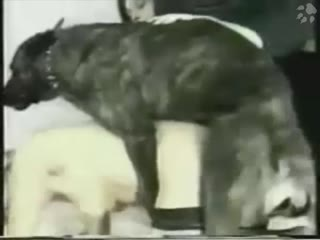 Girl slut showing cam sex with dog