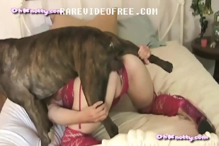 dog sex tube free