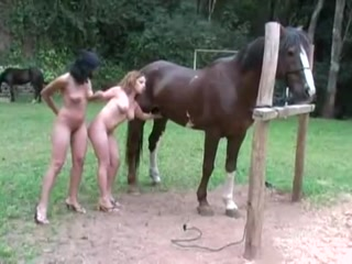 Sex with horse outdoor free
