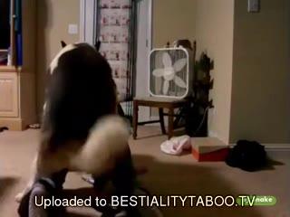 Dog fucks girl hard amateur - Dog porn