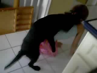 Dress Pink Fucking With Dog  - Amateur free porn - Porn Tubes Video Sex   fapig.com
