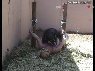 Human fucking dog wtach free video