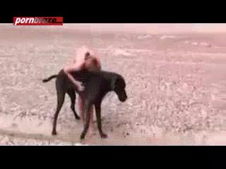 Public Sex Animal Porn Video