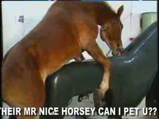 Horse Porn Video