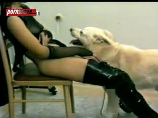orgy Dog Deep Pussy The girl on room