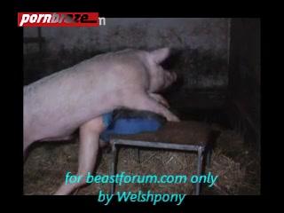 Pig and girl sex av
