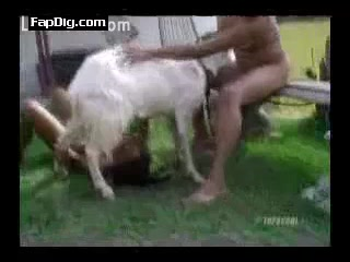 Blowjob For goat - Animal Porn